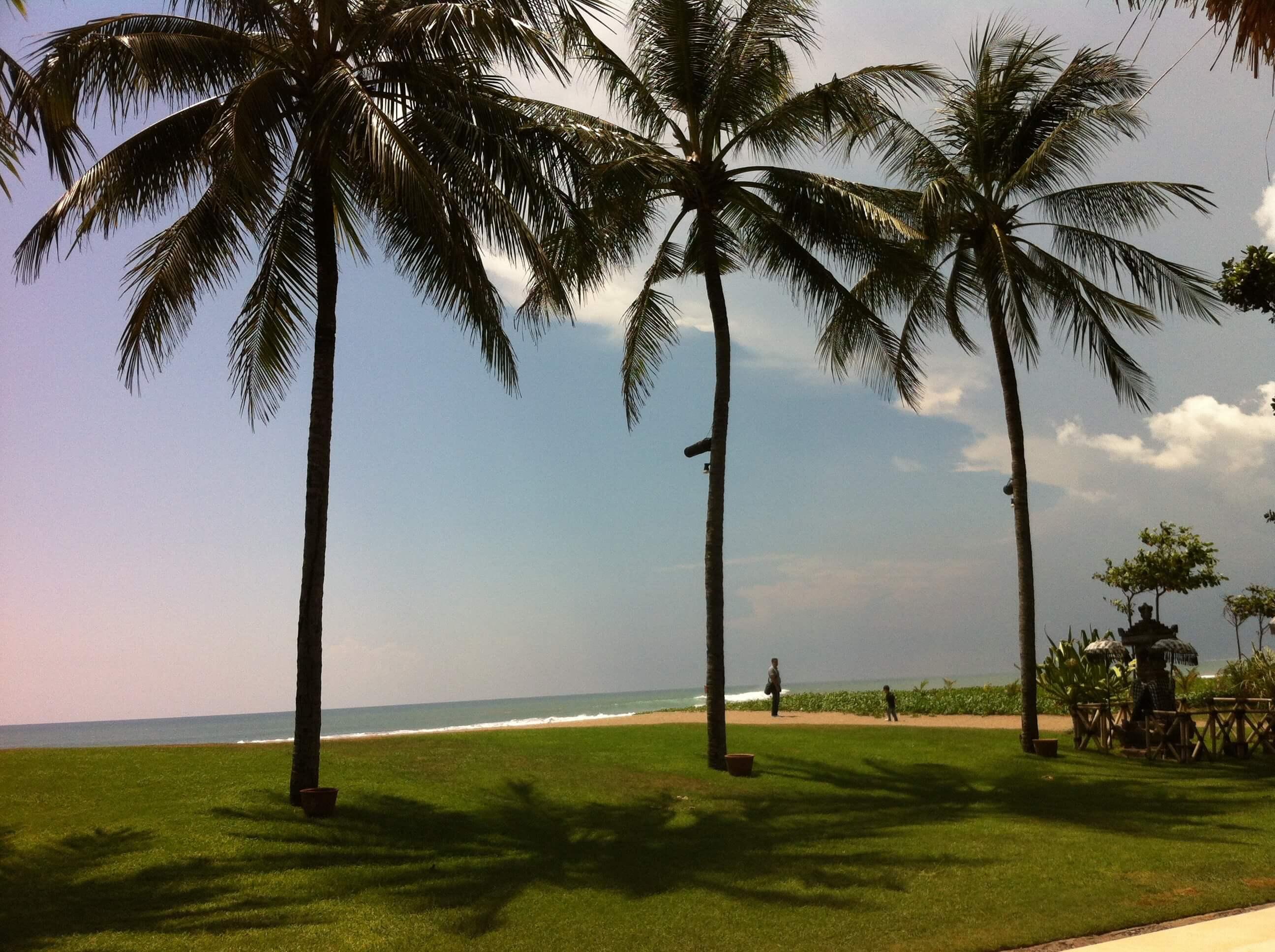 3 tall palm trees on a Bali Beach