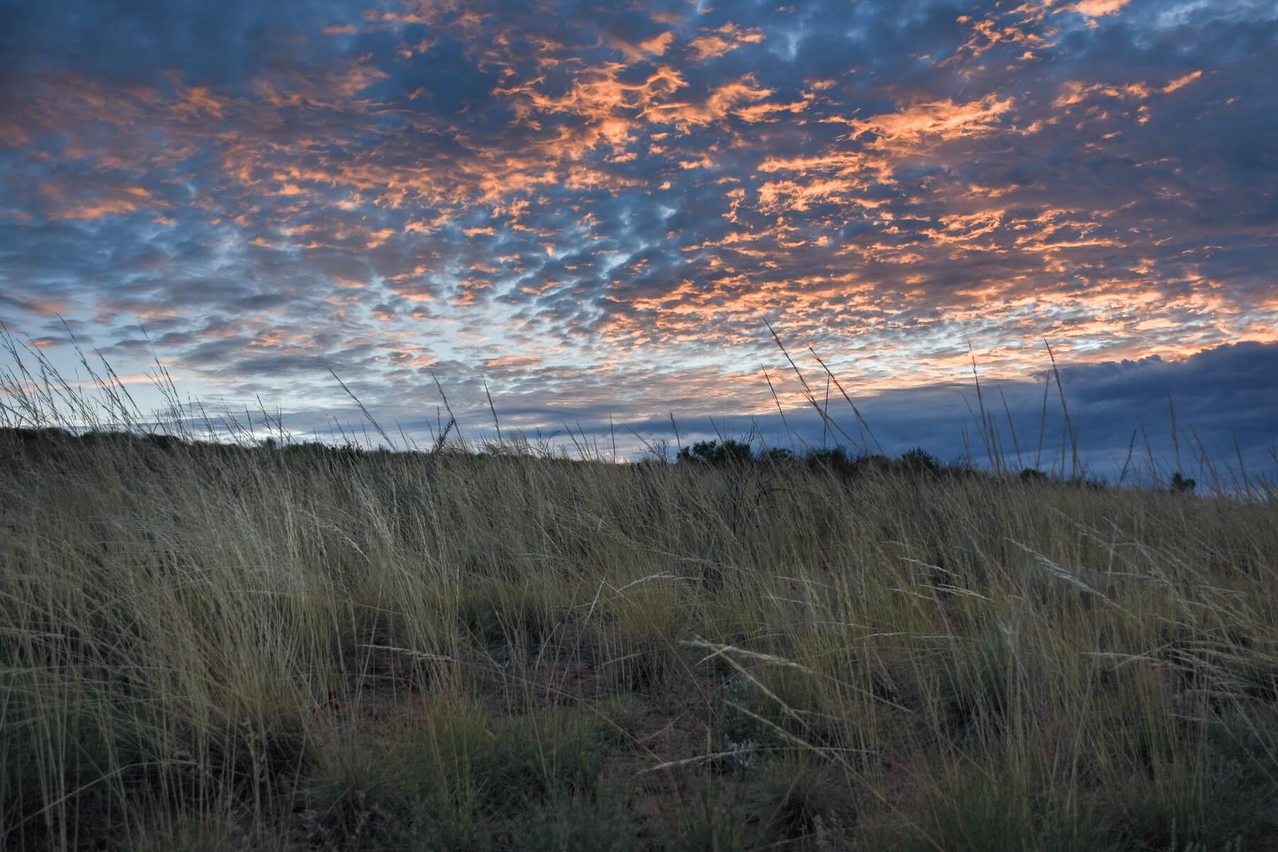 Blue/Orange Sunrise Sky over Spinifex Grass
