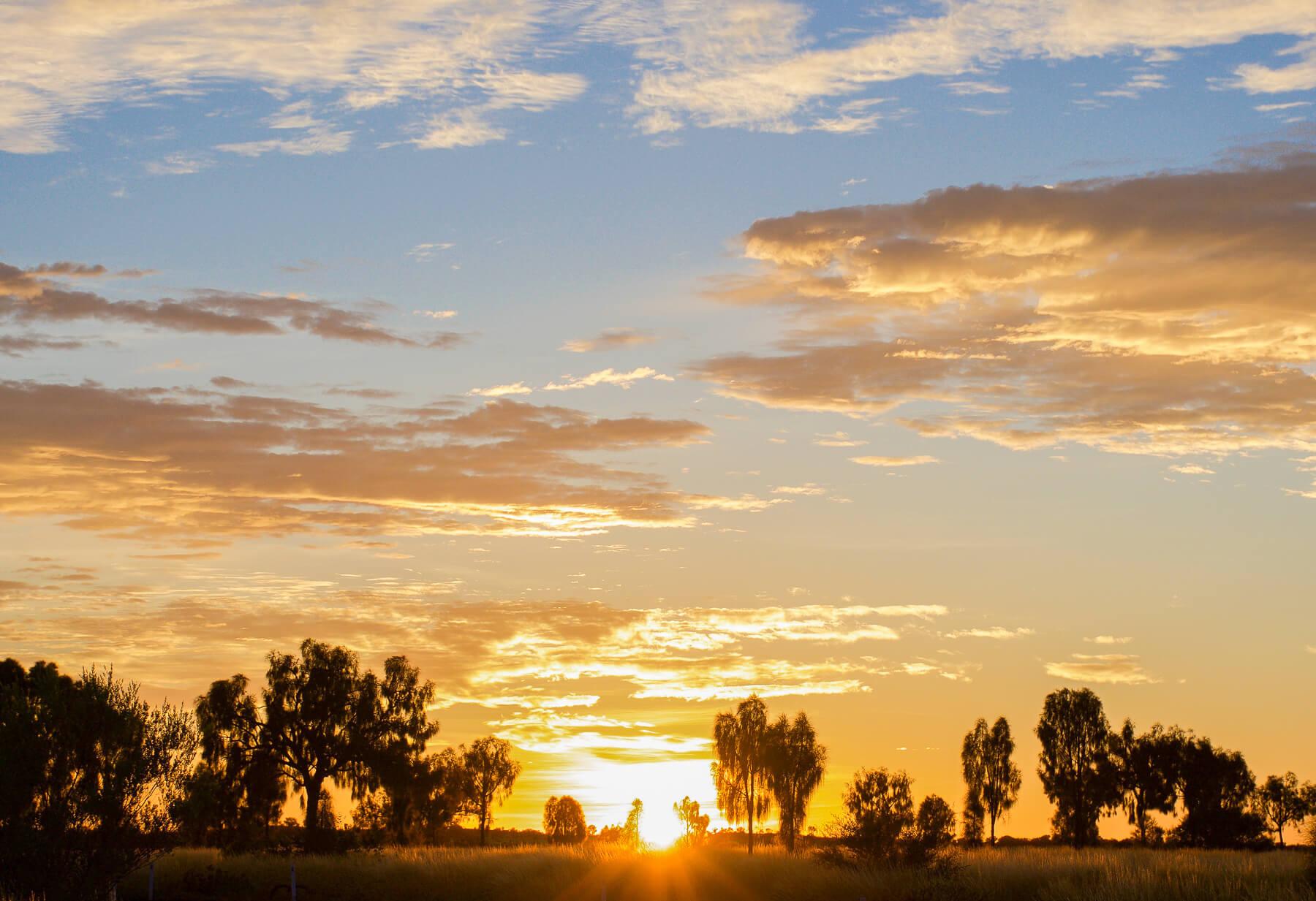 Sun peering over the horizon behind the desert trees