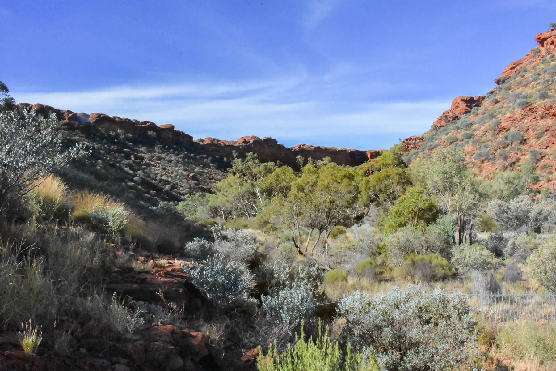 bushy valley inside Kings Canyon