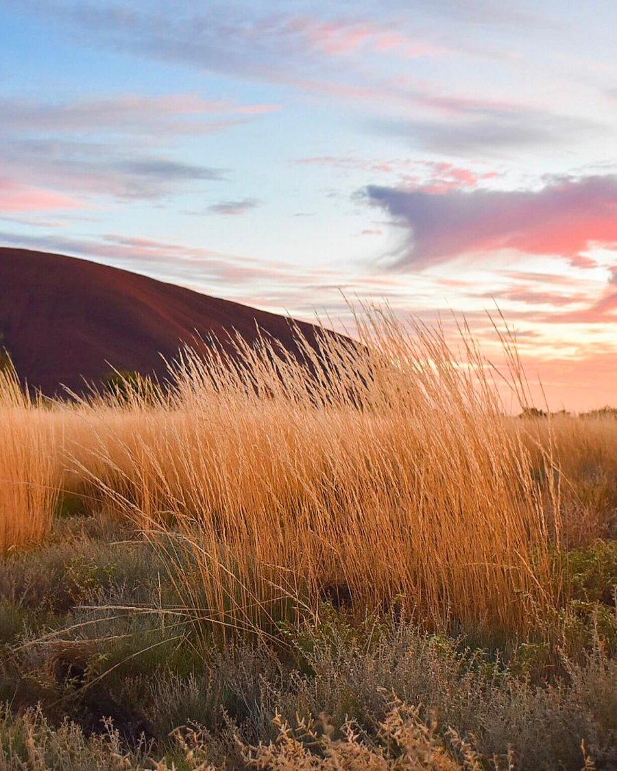 A beautiful Pink Sunrise over Uluru