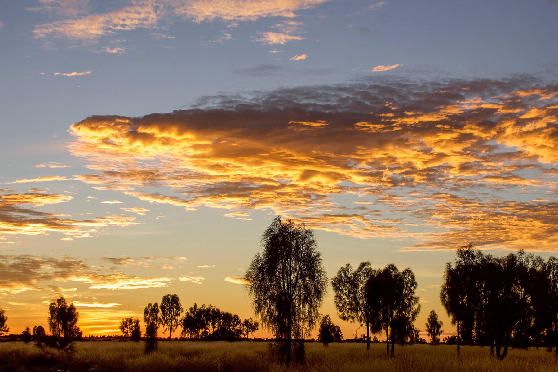 Yellow golden sunrise over desert trees
