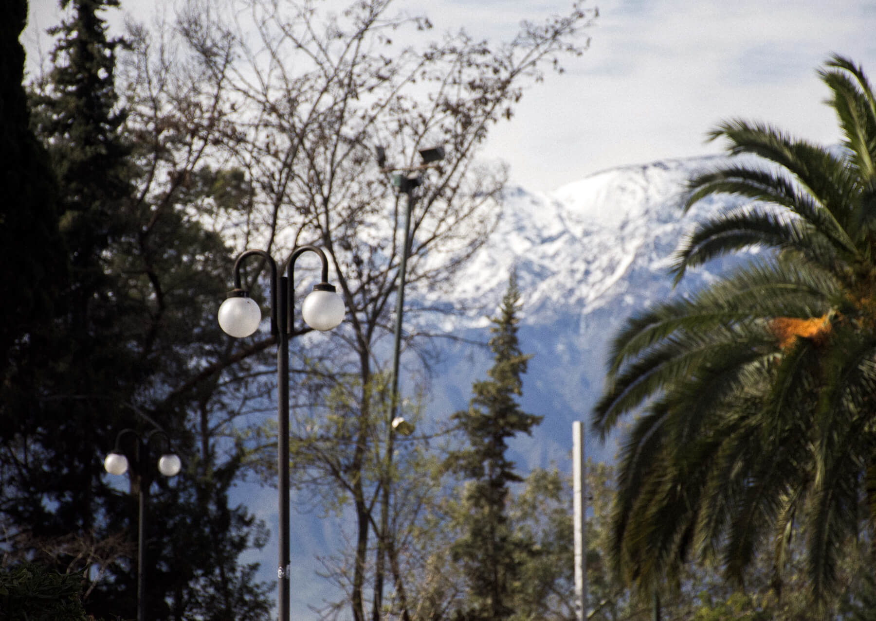 Rounded light posts with palm trees, pine trees and snowy mountains in the background