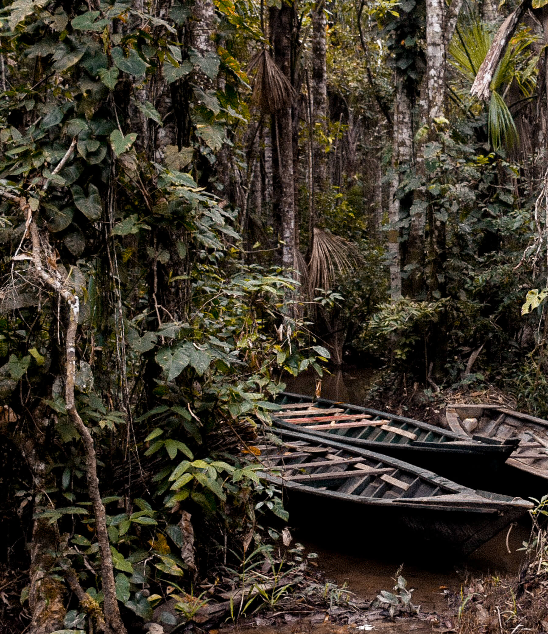 2 dark green canoes surrounded by luscious forest deep in the Amazon