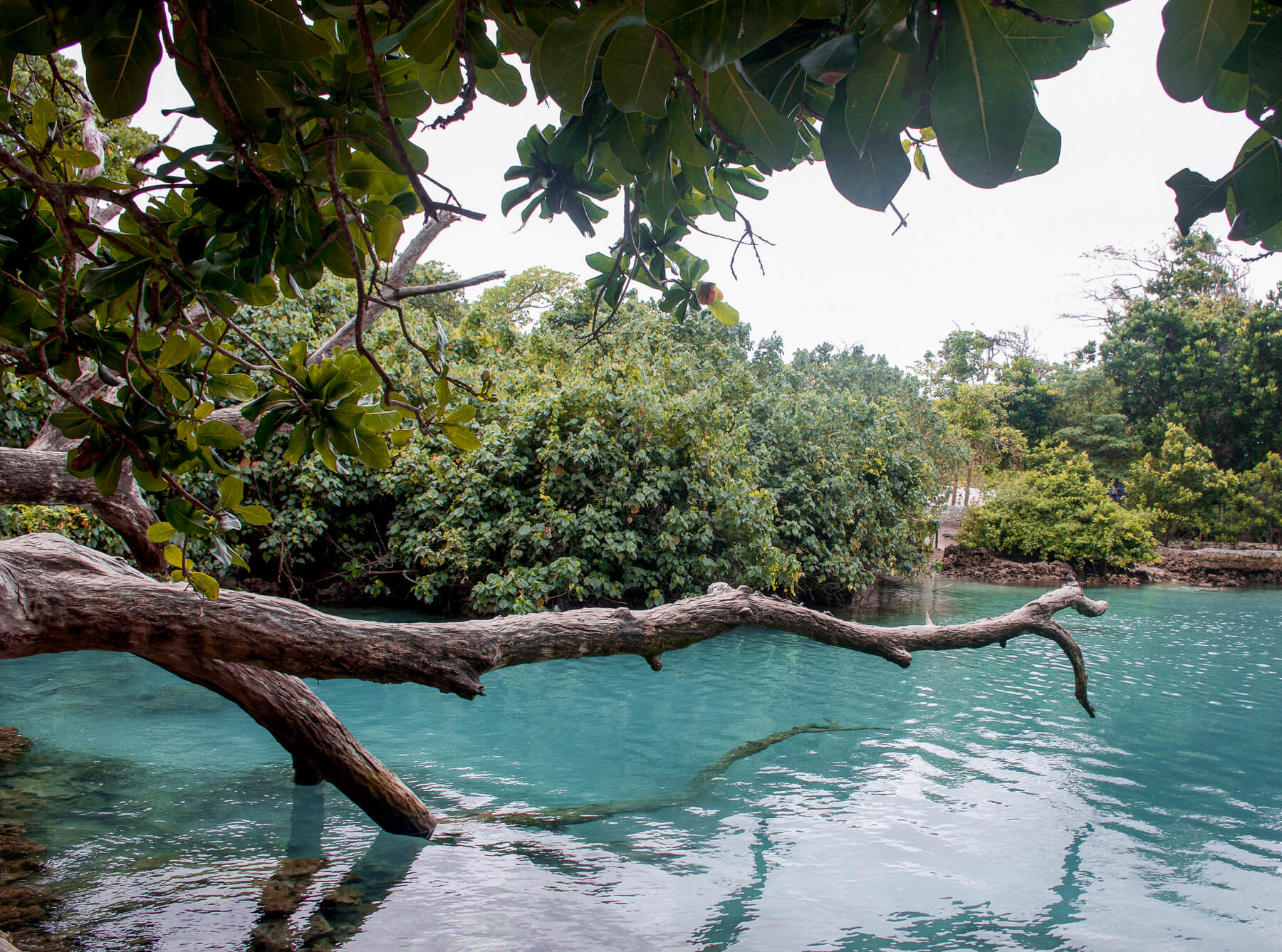 A big wooden branch over the water at Vanuatu's Blue Lagoon