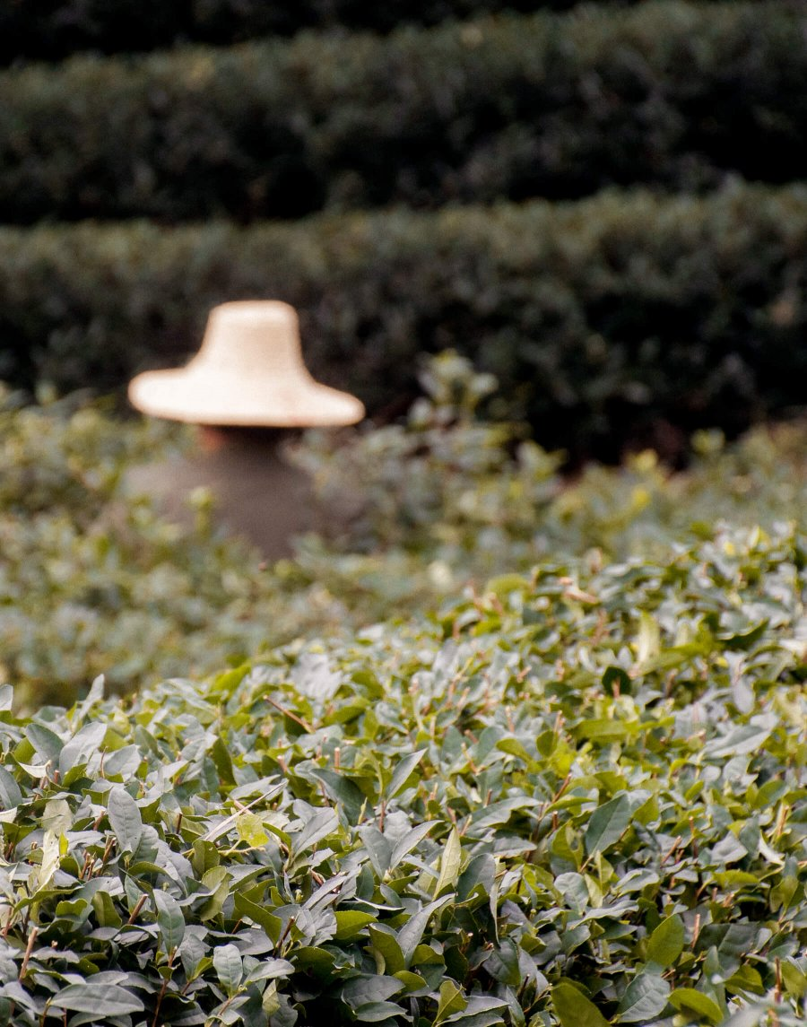 Man wearing wide rim hat, facing away from camera and cutting bushes