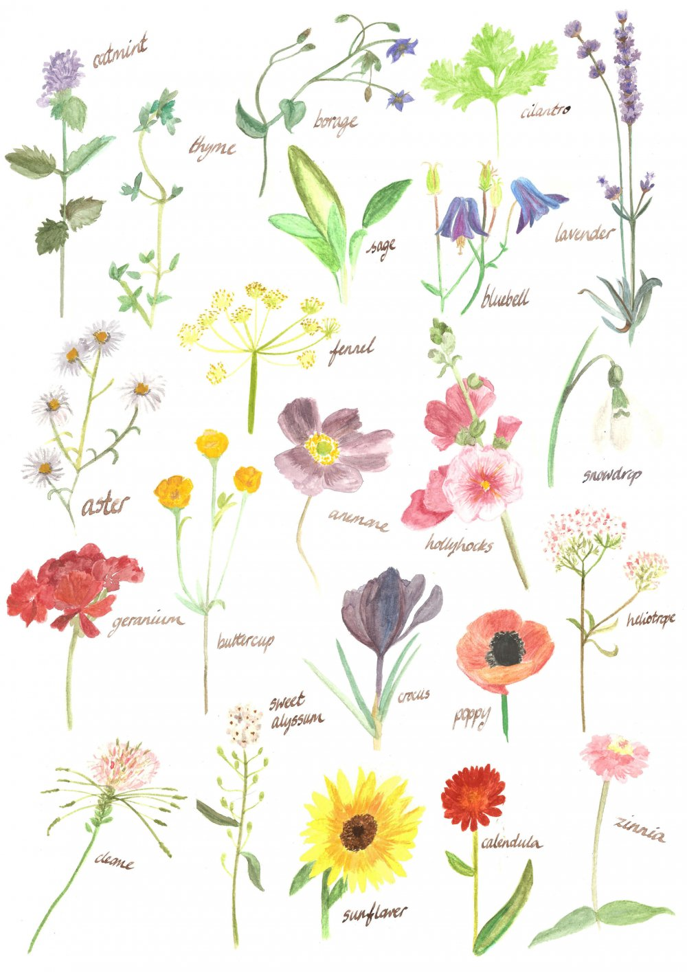 Watercolour drawings of bee friendly flowers