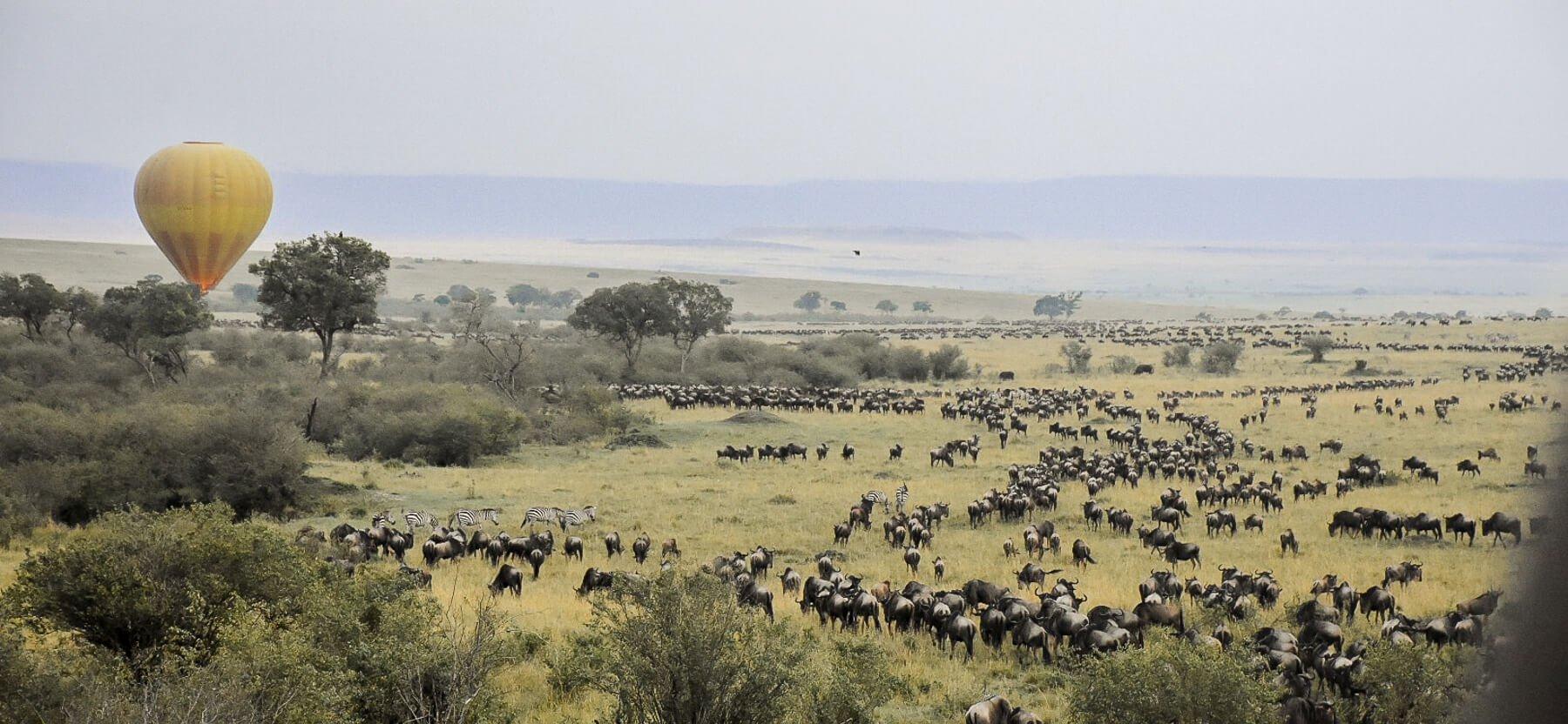 Wildebeest Migration over Maasai Mara Savanna